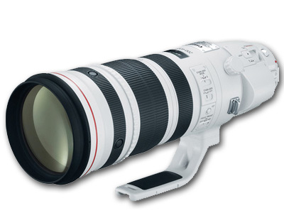 200-400mm f/4L EF IS USM Lens with 1.4x Extender